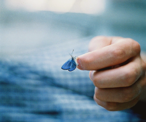 butterfly, vintage, and blue image