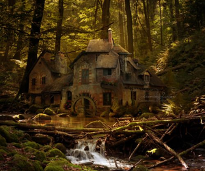 abandoned and forest image