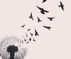 beautiful, birds, and chanel image
