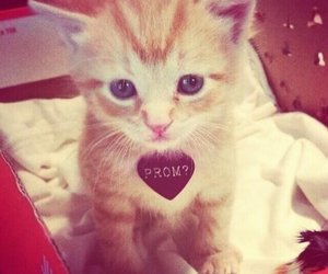 cat, Prom, and cute image