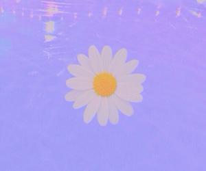 daisy, grunge, and kawaii image