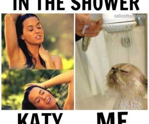 funny, cat, and katy perry image