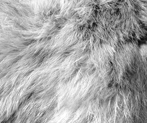 boy, fur, and glamour image