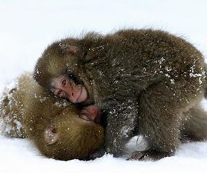 apes, cute animals, and monkey image