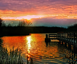 dawn, landscape, and cattails image