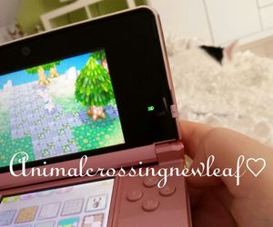 animal, crossing, and game image