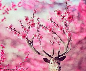 pink, flowers, and deer image
