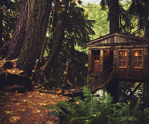 forest, house, and tree image