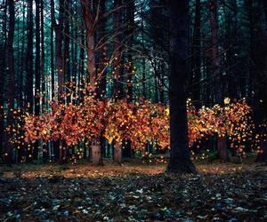 arboles, naturaleza, and hojas image