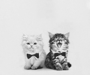 cat, sweet, and cute image