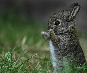 adorable, bunnie, and grass image