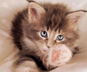 adorable, blue eyes, and eyes image