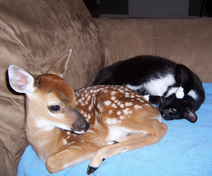 bambi, cat, and friend image