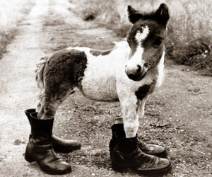 horse, cute, and shoes image