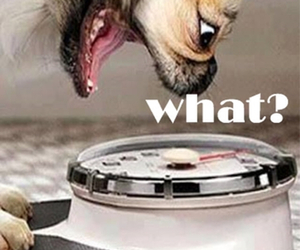 dog, funny, and what image