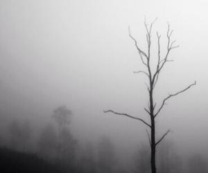 tree and fog image