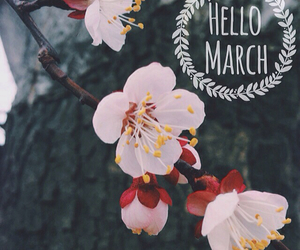 flower, girly, and hello image