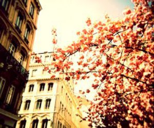 cherry blossom, pretty, and city image