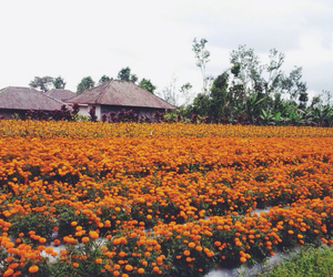 bali, flowers, and beautiful image