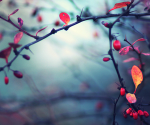 branches, colors, and cute image