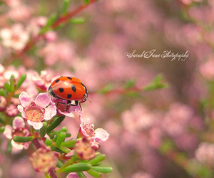 adorable, ladybug, and pretty image