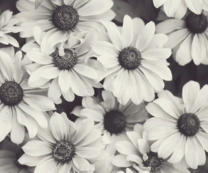 daisy, pretty, and sunflower image