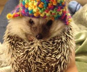 hedgehog, animals, and cute image