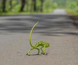 animals, chameleon, and nature image