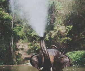 elephant, water, and wild image