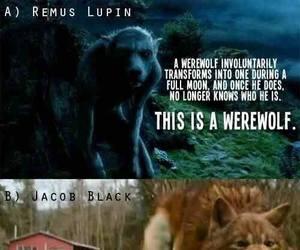 werewolf, harry potter, and twilight image