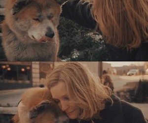 affection, fidelity, and hachiko image