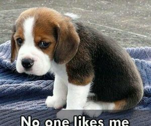 adorable, beagle, and HAHAHA image