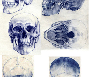 drawing, sketch, and skull image