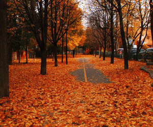 autumn, cold, and photography image