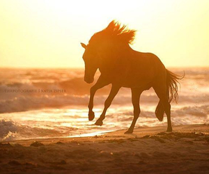 horse, nature, and sun image