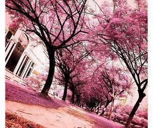 japan, pink flowers, and tree image