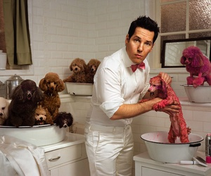 paul rudd, pink, and poodles image