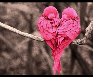 love, birds, and pink image
