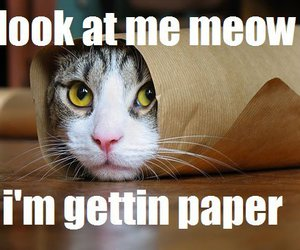 kitten, lol, and Paper image
