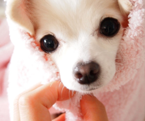 dog, kawaii, and pink image