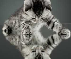 cat, cute, and mirror image