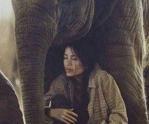 animals, cute, and elephant image