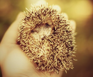 classy, hedgehog, and photography image
