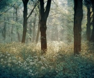 forest, flowers, and nature image