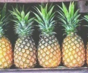 header, pineapple, and twitter image