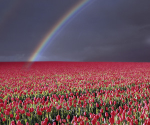 rainbow, flowers, and red image