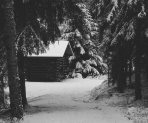 cabin, nature, and trees image
