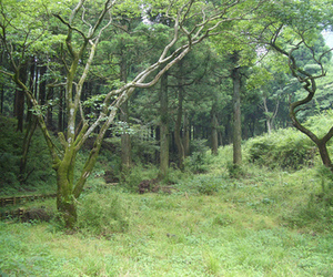 forest, green, and rainforest image