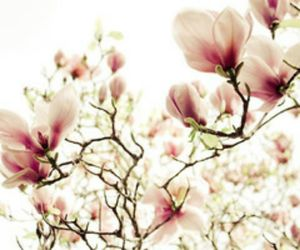 dreamy, tree, and floral image