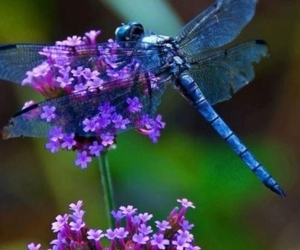 beautiful, bugs, and flower image